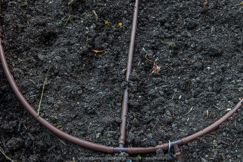 Drip irrigation hose system in a planting bed before planting.