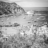 Catalina Island Avalon Bay vertical black and white photo from above in the mountains with the Avalon Casino, Green Pleasure Pier, and city of Avalon. Catalina Island is a popular travel destination off the coast of Southern California in the United States.