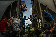 """TENOSIQUE, MEXICO - JULY 2, 2014:  Undocumented migrants pass a young boy between two train cars after they ran and climbed aboard the train """"The Beast"""" as it passes through Tenosique.  Broke, exhausted, daunted by the perilous journey and increasingly confused over the chances for legal admission to the United States, more and more migrants with children are taking a long pause in Mexico, where they find a porous southern border that allows easy entre, a network of shelters to support them and a government that swings between crackdown and compassion in its treatment of those without authorization on its soil. PHOTO: Meridith Kohut for The New York Times"""