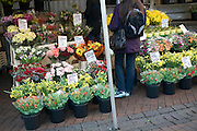 Bunches of flowers market stall display