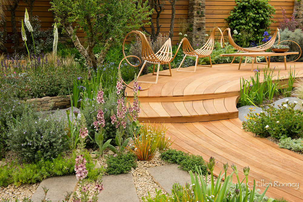 Curved wooden decking and chairs surrounded by Verbascum 'Merlin', Eremerus himilaicus and an olive tree (Olea europea') inThe Royal Bank of Canada Garden designed by Mathew Wilson at The Chelsea Flower Show, 2015, London, UK