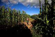 A child runs to the finish of the corn maze at Alstede Farms in Chester.