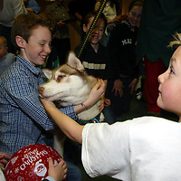 Edrington Group Childrens Christmas party  19.12.02<br />The huskies getting plenty of attention from the children<br /><br />Pic by Graeme Hart<br />Copyright Perthshire Picture Agency<br />Tel: 01738 623350 / 07990 594431