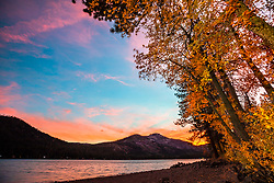 """Donner Lake in Autumn 8"" - Sunset photograph of cottonwood trees with yellow fall foliage along the shoreline of Donner Lake in Truckee, California"