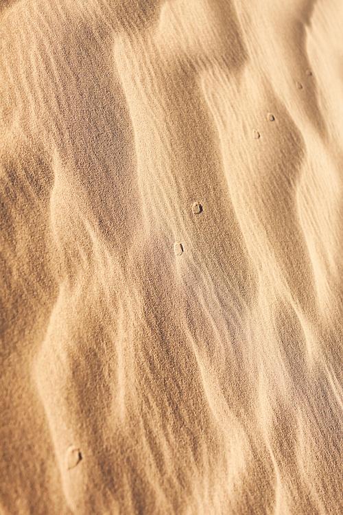 Track of a desert jerboa (jaculus) in the Sahara desert of Morocco.
