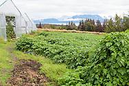 Odlingar hos Oceanside Farms, Homer, Alaska, USA