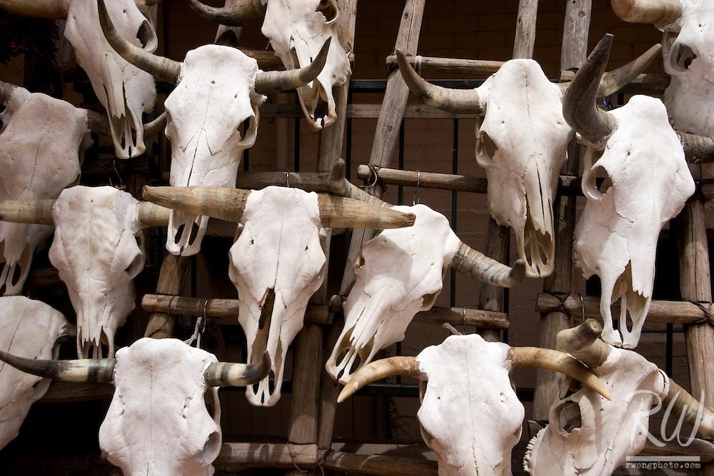 Bull Head Skulls, Santa Fe, New Mexico