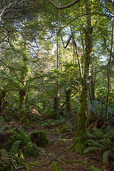 Rainforest at the base of Mother Cummings Peak near Meander, in northern Tasmania.
