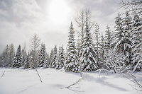 A snow covered landscape.