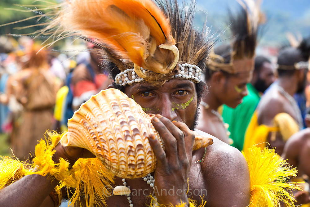 Portrait of a man blowing into a conch shell to make music. He is dressed in traditional tribal dress for the Goroka Show, an annual Singsing Festival in the highlands of Papua New Guinea
