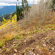 Heather Goodrich rides autumn Singletrack on Teton Pass in Wyoming.