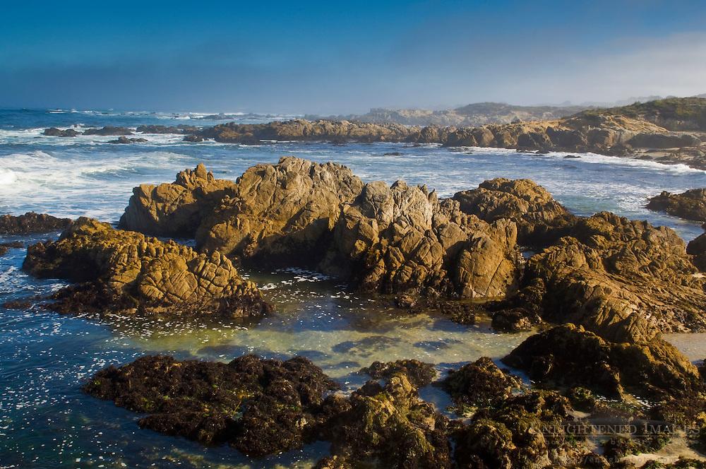 Coastal rocks and fog at Asilomar State Beach, Pacific Grove, Monterey Peninsula, California