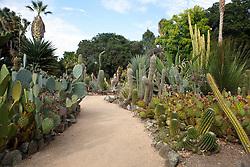General view of path through the Arizona Cactus Garden, Stanford, California, United States of America