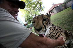 NAMIBIA KAMANJAB 27APR14 - A visitor encounters tame Cheetahs at the Ojitotongwe Cheetah farm near Kamanjab, Namibia.<br /> <br /> <br /> <br /> jre/Photo by Jiri Rezac<br /> <br /> <br /> <br /> © Jiri Rezac 2014