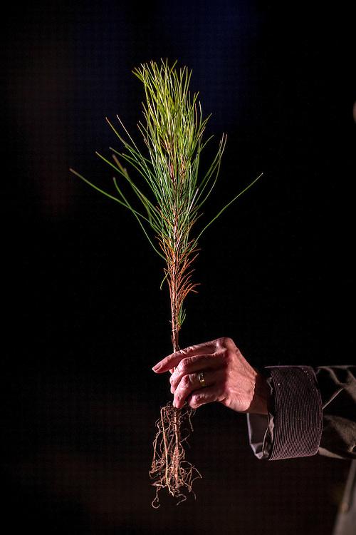 OLIVER, GA - DEC., 15, 2016: Lynda Beam holds a slash pine seedling on her TooHolly farm, Thursday, December 15, 2016, in Oliver, Ga. (Photo by Stephen B. Morton for Georgia Forestry Magazine)