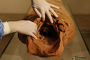 "GEORGES LABIT MUSEUM, TOULOUSE, FRANCE - MARCH 03 - EXCLUSIVE : A view from behind of the beheaded Egyptian mummy with the hands of the nurses showing the orifice on March 3, 2009 in the Georges Labit Museum, Toulouse, France. The Egyptian mummy arrived in Toulouse in 1849, encased in a sarcophagus labelled ""In-Imen"" from the 7th or 8th century BC. It is preserved at the Labit Museum since 1949. The mummy is now the subject of a very rare tissue sampling operation to determine its datation.  (Photo by Manuel Cohen)"