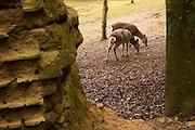 Wild deer in Nara Park.