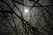 Nederland, Ubbergen, 4-1-2015Zie de maan schijnt door de bomen.FOTO: FLIP FRANSSEN/ HOLLANDSE HOOGTE