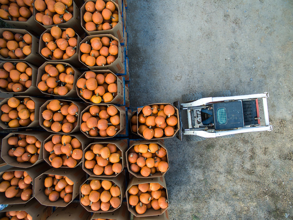 Pennsylvania farmers hauling pumpkins,  Berwick