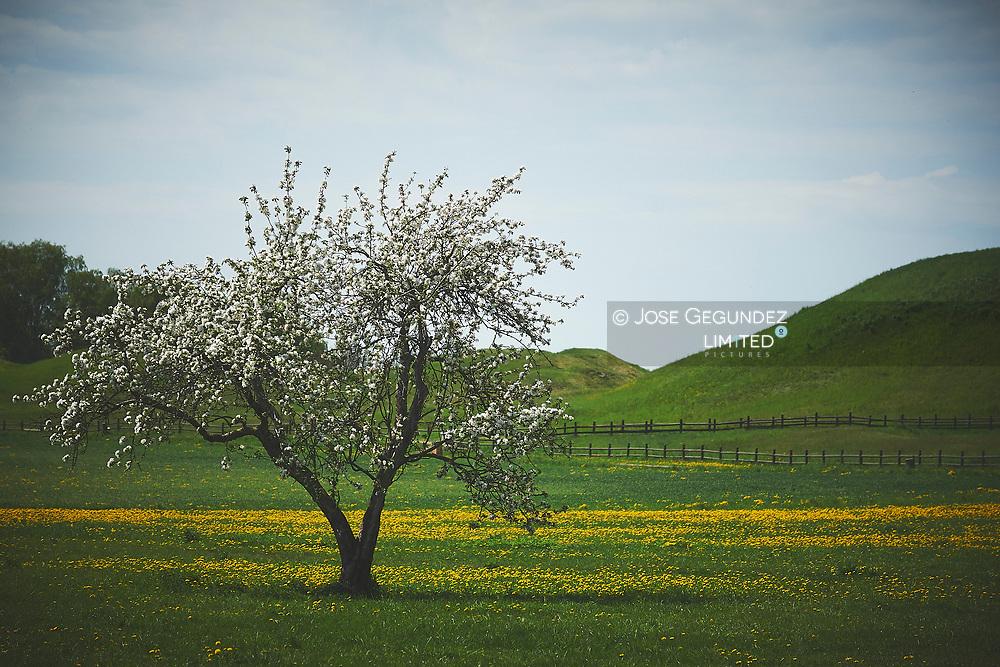 Flower tree on spring time