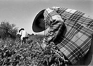 Filipino Migrant Farmers