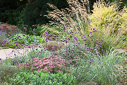 Border at Beth Chatto gardens with Verbena bonariensis and Stipa gigantea