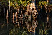 Cypress Trunk Lake Dauterive