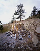 AA03481-01...COLORADO - Petrified stump in Florissant Fossil Beds National Monument.
