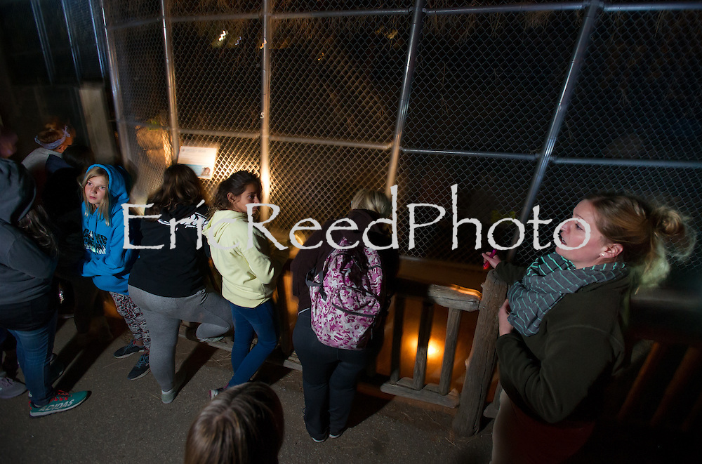 Visitors explore the nocturnal happenings at the Big Bear Alpine Zoo during its Flashlight Safari in Big Bear Lake, Saturday, Oct. 8, 2016. The zoo holds the Flashlight Sfari each Friday and Saturday during the month of October (weather permitting) which is a unique tour exploring the more active side of the animals during twilight and dusk. Exploring the zoo after dark is an experience of its own.   (Eric Reed/BigBearAlpineZoo)