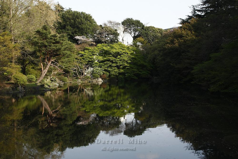 April 11, 2008; Tokyo, Japan - Shinjuku Gyoen, Shinjuku...Photo credit: Darrell Miho