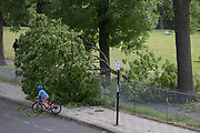 After a period of warm spring weather, and during the UK's government's Coronavirus continuing lockdown restrictions, when a total of 36,393 UK citizens are now reported to have lost their lives, strong gusts of wind brought down a large branch from a 100 year-old ash tree that fell across a well-used path during the lockdown in Ruskin Park, a public green space in the south London borough of Lambeth, on 22 May 2020, in London, England. No-one has been reported as hurt in the incident.
