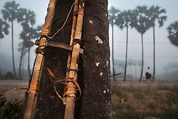 Detail of the ladder that Ko Aung Myo uses to climb to the palm tree tops every day. At Ka Myaw Gyi village in the outskirts of Dawei, Myanmar.