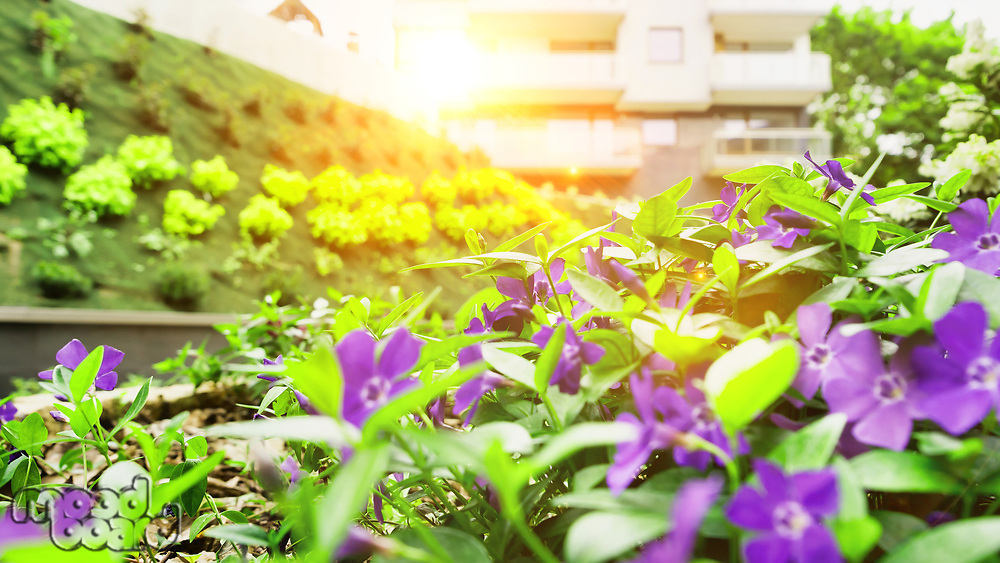 Photo of flowers growing in the garden with lens flare in background