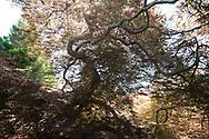 Garden 6 Calf Creek Ct, Water Ill, NY