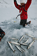 (MODEL RELEASED IMAGE). After a day of dogsled travel, Emil, Erika, and the children head out to fish for arctic char. After chopping holes in the ice with a pike, family members lower down hooks baited with seal fat. When the char bite, Erika yanks them out of the hole with a practiced motion.  Hungry Planet: What the World Eats (p. 149).