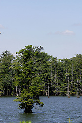 July 2007:  Horseshoe Lake Conservation area,