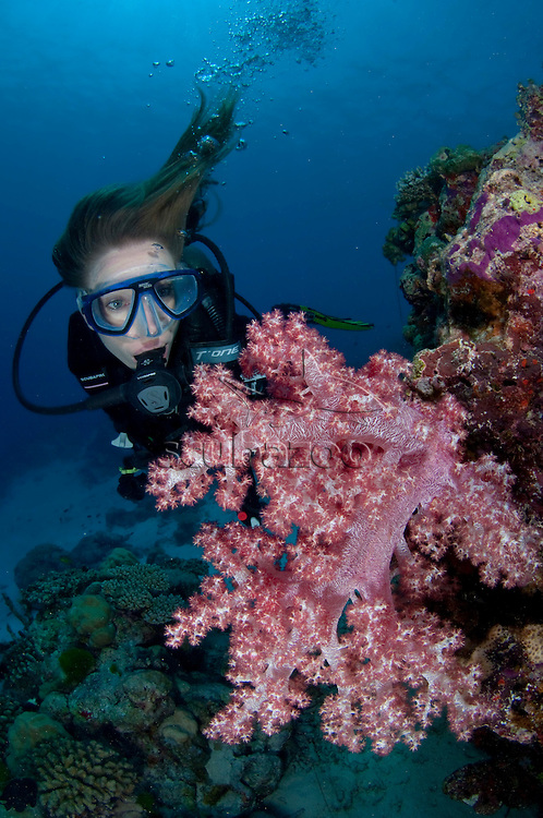 Diver looking at a pink Dendronephthya Soft Coral on wall, profile, front view, Vaavu Atoll, The Maldives