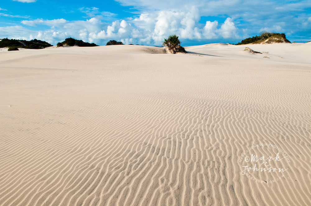 Sand dunes, Moreton Island, Queensland, Australia