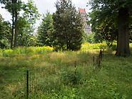 Central Park-Meadows