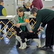 Highlights from the 2013 WESSA Funmatch.  The event took place at the Western Waukesha Dog Training Club, in  Ixonia, WI.  Photography by Melody Carranza.