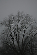 Silhouettes of trees in San Antonio, TX on Feb 7, 2007. (Photos  by Lance Cheung, Copyright 2007)..PHOTO COPYRIGHT 2007 LANCE CHEUNG.This photograph is NOT within the public domain..This photograph is not to downloaded, stored, manipulated, printed or distributed with out the written permission from the photographer. .This photograph (on this web site) is protected under domestic and international laws.