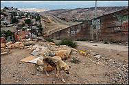 Límites de la ciudad de Tijuana con el muro fronterizo. (FOTO: Prometeo Lucero)
