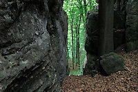 Sandstone formation and beech trees (Fagus sylvatica), Mullerthal trail, Mullerthal, Luxembourg