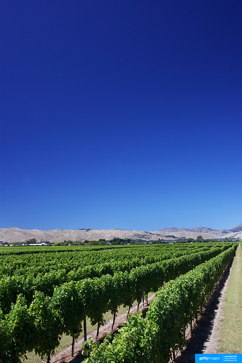 Sweeping views of vineyards with a stunning mountain range back drop in the Marlborough Wine Region, Blenheim,  South Island of New Zealand.<br /> The Marlborough wine region is New Zealand's largest wine producer. The Marlborough wine region has earned a global reputation for viticultural excellence since the 1970s. It has an enviable international reputation for producing the best Sauvignon Blanc in the world. It also makes very good Chardonnay and Riesling and is fast developing a reputation for high quality Pinot Noir. Of the region's ten thousand hectares of grapes (almost half the national crop) one third are planted in Sauvignon Blanc.  Marlborough, New Zealand, 10th February 2011. Photo Tim Clayton