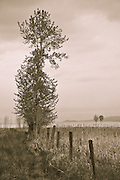 Dog and lone tree and trail on Flathead Lake's north shore