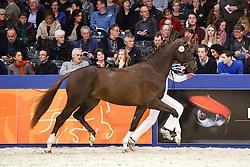 508 - Ferguson<br /> KWPN Stallion Selection - 's Hertogenbosch 2014<br /> © Dirk Caremans