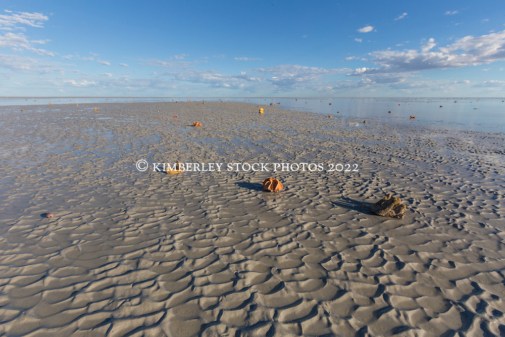 Sponges on an exposed sandbank in Roebuck Bay on a low spring tide.