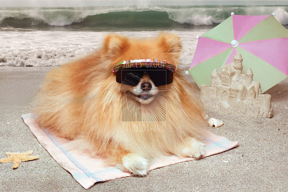 Pomeranian dog wearing sunglasses, lying on a towel at the beach with sandcastle, umbrella and waves in the background