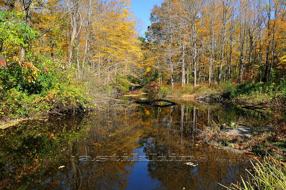 Fall forest mirrored on calm clear wetland pond.