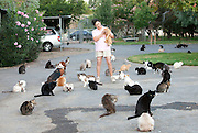 Aug 04, 2011 - Parlier, California, USA - <br /> I'm no crazy cat lady... insists the California animal lover who lives with 700 felines<br /> <br /> Lynea Lattanzio, of Parlier, California, lives with over 700 felines. <br /> But she insists she's no crazy cat lady. <br /> On the contrary, Ms Lattanzio, the star of a new Nat Geo documentary, runs Cat House on the Kings - a '12-acre no-cage, no-kill cat refuge' where she takes in strays, offers low-cost spaying and neutering referrals and facilitates pet adoptions. The show, titled The Lady with 700 Cats, is narrated by Glee actress Jane Lynch as part of the Nat Geo WILD series premiering later this month.<br /> The programme opens with the backstory of The Cat House, founded by Ms Lattanzio just outside of Fresno. <br /> Ms Lattanzio, who said her mother banned her from having a cat as a child, said she began taking rescues after a divorce. <br /> Now, she takes in rescues from all over the world, and estimates she has saved close to 19,000 felines in almost two decades.<br /> <br /> <br /> She said often cats are flown in from New York, after owners decide their apartments are too small for their pets. Sometimes, locals drop unwanted kittens right on her doorstep.<br /> Her sanctuary, which employees 25 workers, is an around-the-clock operation, and the largest of its kind in the world. <br /> A nursery, an intensive care unit and even a retirement home for elderly cats are housed in its walls, where endless meows echo throughout the day.<br /> 'If I were a cat, this is where I'd be. We're a no-cage, no-kill adoption sanctuary,' she explained.<br /> <br /> And as if hundreds of cats were not enough to look after, Ms Lattanzio also has about 15 dogs, which can be seen running around the property in a video trailer. <br /> She says, however, this is just the start.<br /> Ms Lattanzio, who promotes the sanctuary online on Facebook, PetFinder and YouTube.com, expects the series to increase traffic at the refuge. And s